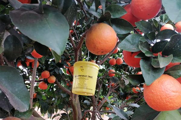 about citrus