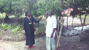 kenyan mango - hola