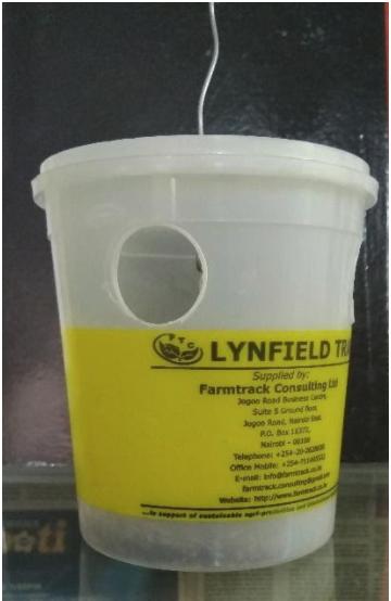 lynfield 2