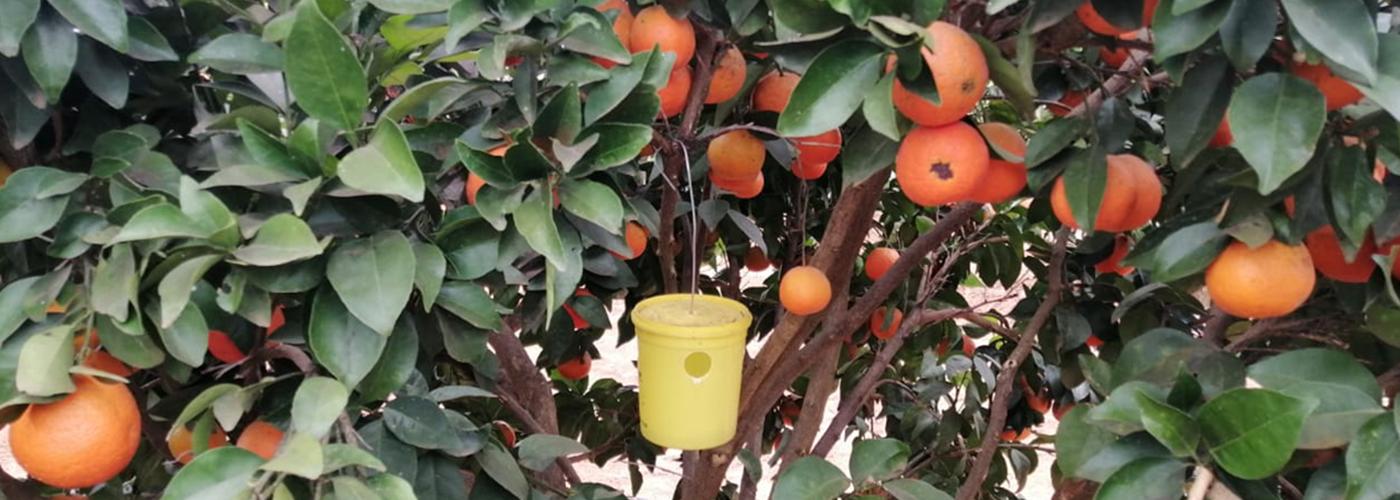 slideimg citrus